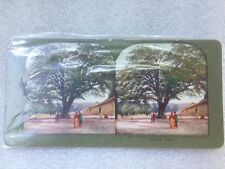 Antique stereoview card **# 631. Kyoto, Japan. Ginko Biloma Tree Kwannon Temple*