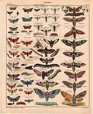 OKEN 1843 Antique Large H/C Lithograph - INSECTS MOTHS SPHINX - Natural History