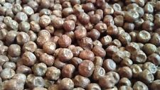 BLACK CARLIN PEA ANCIENT ENGLISH 14 C VARIETY RARE HEAVY CROPPER 40 FRESH SEEDS