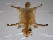 SOFT TANNED/ Red Fox/FUR/SKIN/HIDE/ CABIN/TAXIDERMY Shoulder 3