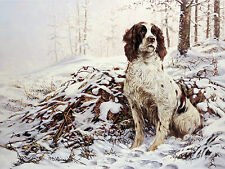 ENGLISH SPRINGER SPANIEL GUN DOG FINE ART LIMITED EDITION PRINT ESS In The Snow