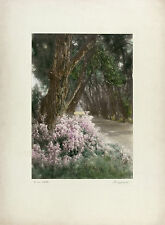 "PERCY F MURRAY SIGNED Antq c1920s XRare Hand-colored ""Murray Print"" WILD ASTERS"