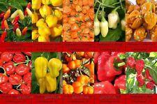 Superscharfe Habanero Bonnet Tabasco Chili Samen 10 Sorten Schärfe 10  Saatgut