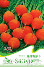 FREE SHIPPING 20 Carrot Seed Healthy Green Organic Fruit Vegetables Seeds