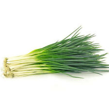 2000pcs Organic Chives Shallot Seeds Garden Green Onion Vegetable Plant NEW