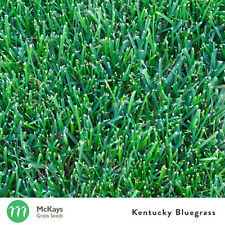 McKays Kentucky Bluegrass Grass Seed- 1kg - Lawn Seed Free Postage