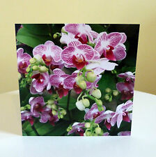 Blank Greetings Cards Flower Birthday Notelet Orchids All Occasions Multi