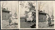 26 Antique Photo POOR LIITLE RICH BOY Cute Kid BULL TERRIER Goat SHETLAND PONY