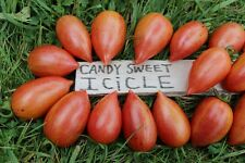 CANDY SWEET ICICLE Tomato Seeds - 50 Seeds - sweet and pointed!