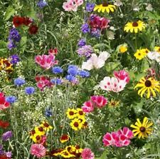 FLOWER BUTTERFLY & BEE MIX - NATIVE AND NEW WORLD ANNUALS - 100GM - 80 SQ METERS