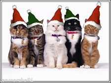 Set of 4 Kitten Cat Christmas Cats Greetings Stationery Notecards / Envelopes