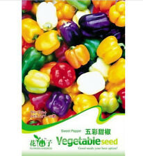 FD1285 Sweet Pepper Seed Colorful Ornamental Pepper Seeds ~1 Pack 20 Seeds~