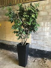 ARTIFICIAL 8 Ft TREE PLAT IN ALUMINIUM BLACK PLANT POT