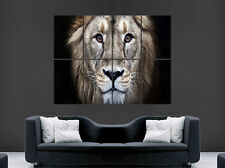 LION EYES POSTER WILD ANIMAL CAT GIANT WALL PICTURE PRINT LARGE