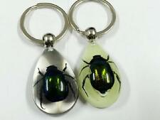 PAIR Real Green Beetle Glow Lucid Drop Keychain Insect Specimen Gift NG