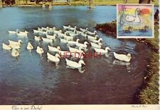 Continental-size A GROUP OF PEKIN DUCKS CLOSE TO SHORE  A Wiggle Card