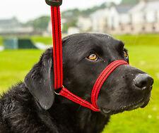 Gencon tutto in uno, DOG misure a e condurre tutti in one-navy Blu / Giada