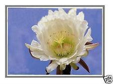 """14.0"""" LCD Screen for HP Pavilion DM4-3055dx DM4-3099se DM4-1265dx DM4-3050US LED"""