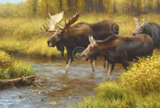 Gros Venture by Kyle Sims Art Print Poster Moose Wildlife Hunting Decor 13x19