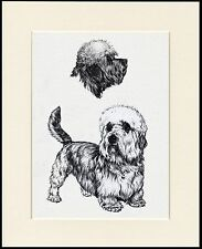 DANDIE DINMONT TERRIER LOVELY DOG SKETCH PRINT MOUNTED READY TO FRAME