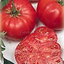 100 Beefsteak Tomato Seeds Organically Grown Plants TT211