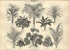 Stampa antica BOTANICA FIORI PIANTE SEMPREVERDI Tav. 1 1890 Old antique print