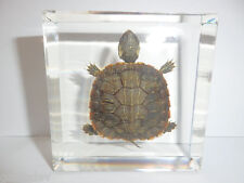 Real Farmed Turtle Specimen - Red-eared Slider (in Clear Square Paperweight)