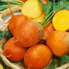 100Golden Beet Seeds Fruit and Vegatable seeds.For Home Garden Plants TT070