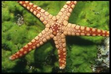 012003 Sea Star On Green Plants A4 Photo Print