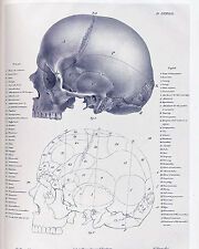 "Vintage Skull Diagram Anatomy Medical Chart Painting 8x10"" Canvas Art Print New"