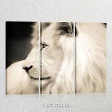Leone 3 QUADRI MODERNI ARREDAMENTO CASA UFFICIO QUADRO STAMPA TELA ANIMALI LION