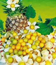 20 Seeds Cossack Pineapple Ground Cherry ORGANIC Cape gooseberry Husk Tomatillo