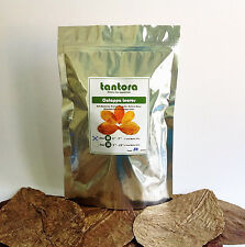 "TANTORA CATAPPA  Indian Almond Leaves IAL Medium size  50 leaves   ( 5""- 7"" )"