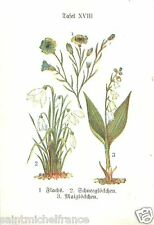PLANCHE 1910  CARD IMAGE Common Flax Snowdrop Lily  valley Muguet Galanthus