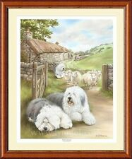 OLD ENGLISH SHEEPDOG dog art print 'Bobtail's Droving'