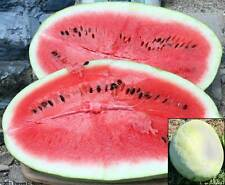 Watermelon Seeds - ALI BABA - Large Melons - Heavy Yields - Gmo Free -10 Seeds