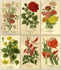 315 flower colour plates from the antique book (1896) on one DVD