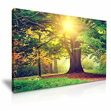 Large Forest Tree Sunshine Canvas Wall Art Picture Print 76cmx50cm