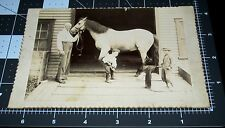 1870's Occupational Farrier PHOTO Horse shoe Child Labor Silly Boys BLACKSMITH