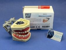 Dental Typodont Anatomy Educational Model With Universal Plate Model 860