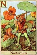 NASTURTIUM Alphabet FLOWER FAIRY Old Vintage Print by Cicely Mary Barker Letter