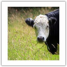 Greetings Card Birthday / Blank Notelet - Cow Farm Animal Nose Nosey Nature
