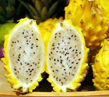 PITAYA SEEDS - YELLOW - DRAGON FRUIT - HEALTHY FRUIT - GMO FREE - 50 SEEDS