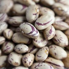 100 Romano Pole Bean,Heirloom,Seeds are open pollinated and organically grown.