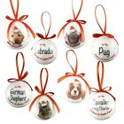 Christmas Pet Bauble Xmas Decoration 21 Dogs 3 Cats Believe In Santa Paws