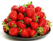 100 ALBION EVER BEARING STRAWBERRY PLANTS - CERTIFIED HEALTHY BARE ROOT PLANTS