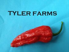25+ Ghost Pepper (Bhut Jolokia) Seeds (Hot, organic chili, chile)