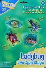 Minibeasts LADYBIRD / ladybug LIFECYCLE eggs, larva, pupa, beetle life cycle