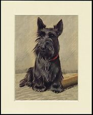 SCOTTISH TERRIER SEATED DOG CHARMING DOG PRINT MOUNTED READY TO FRAME
