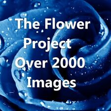 OVER 2000 FLOWER IMAGES ALL HI RES FOR CARD MAKING, DECOUPAGE,T SHIRTS ON DVD